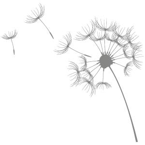 Pusteblume-grau-gespiegelt